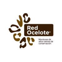 Red Ocelote